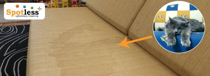 Urine Stain Removal from Couch