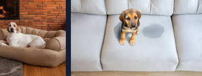 Pet stain removal Perth